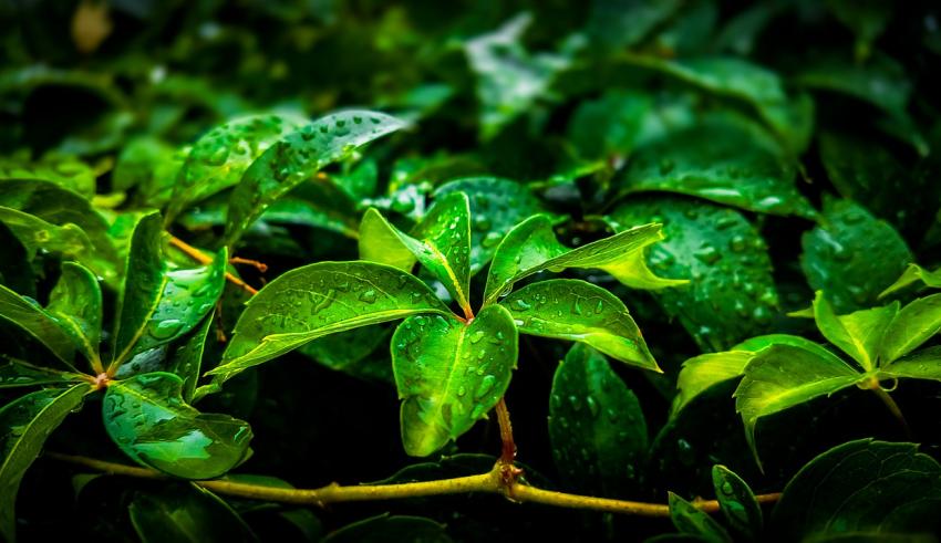 jak być bardziej eko