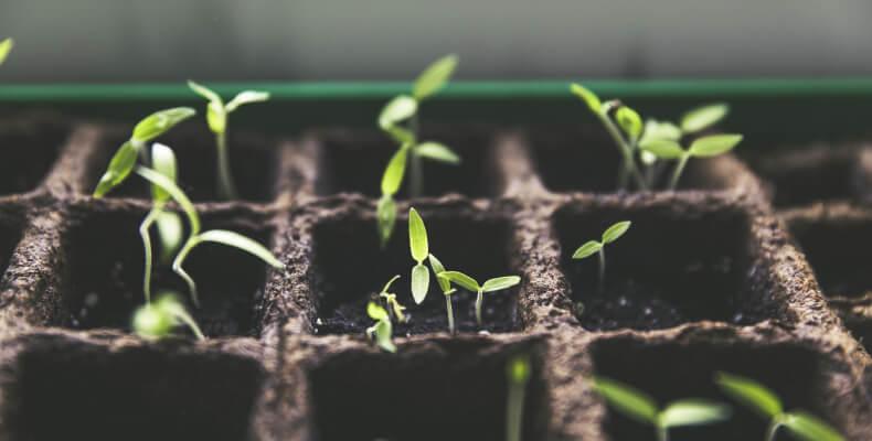 Ogród w słoiku - pielęgnacja, jak stworzyć ogród w słoiku