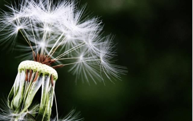 Jak radzić sobie z alergia
