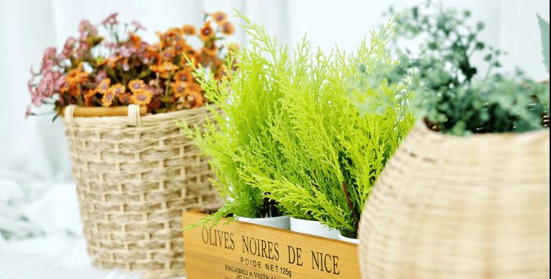 Kwiaty wieloletnie w domu
