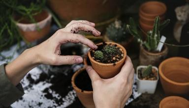 Rośliny, które warto mieć w sypialni