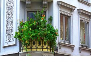 Jak stworzyć oazę zieleni na balkonie w miejskiej dżungli