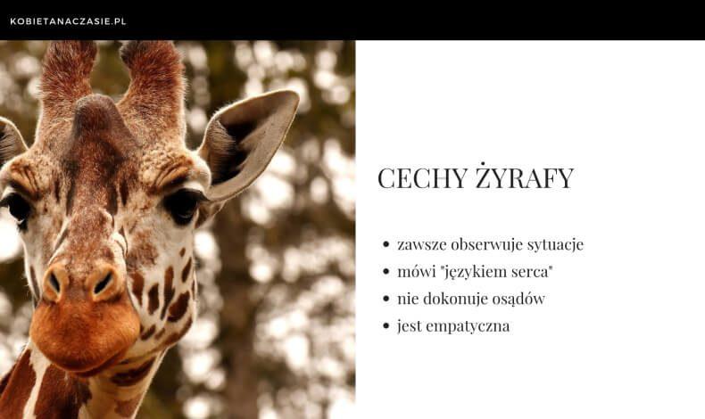 Porozumienie-bez-przemocy-język-żyrafy