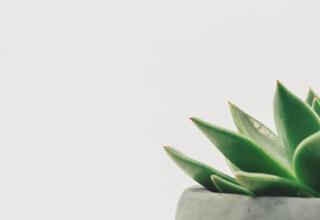 Rośliny oczyszczające powietrze w mieszkaniu