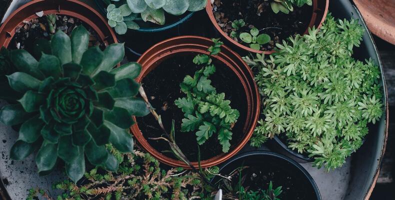 Zielona siła - rośliny oczyszczające powietrze