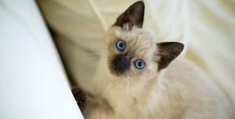 jak nauczyć kota korzystania z kuwety