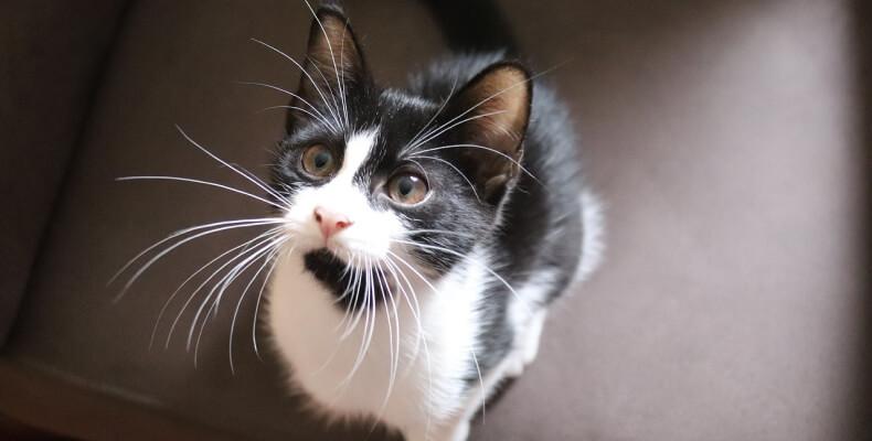 jak zajmować się kotem