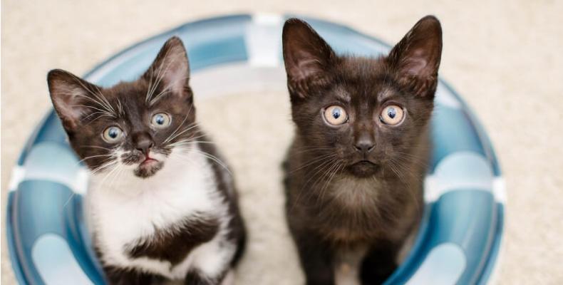 małe koty w domu