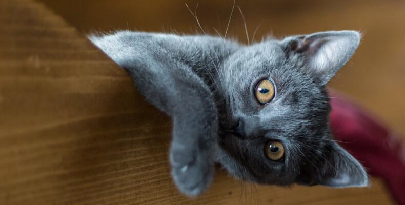 mały kot w mieszkaniu