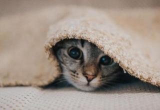 Czym karmić małego kotka