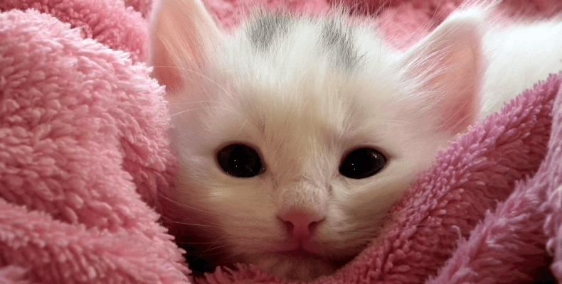Czym karmić małego kotka - karmienie kociąt
