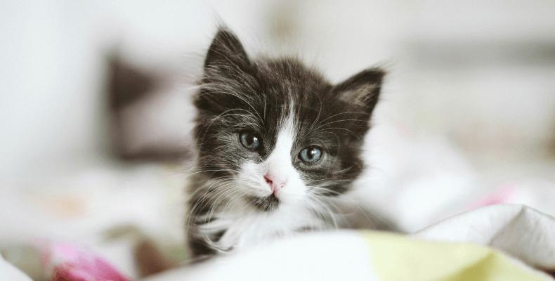 Kocie zwyczaje - mowa ciała kota dlaczego kot mruczy
