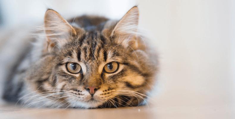 Mowa ciała kota - dlaczego kot mruczy