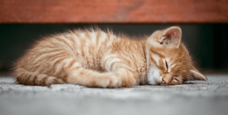 Mowa ciała kota - kiedy kot jest szczęśliwy