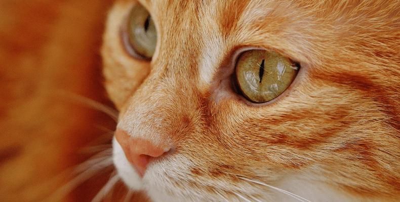 Mowa ciała kota - oczy i wąsy
