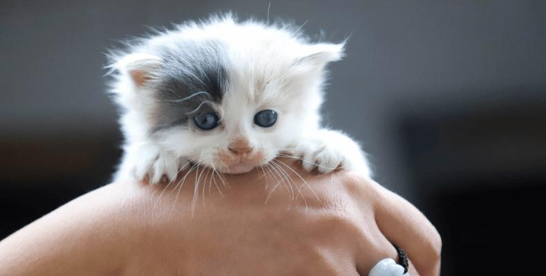 Mowa ciała kota - zwyczaje kotów