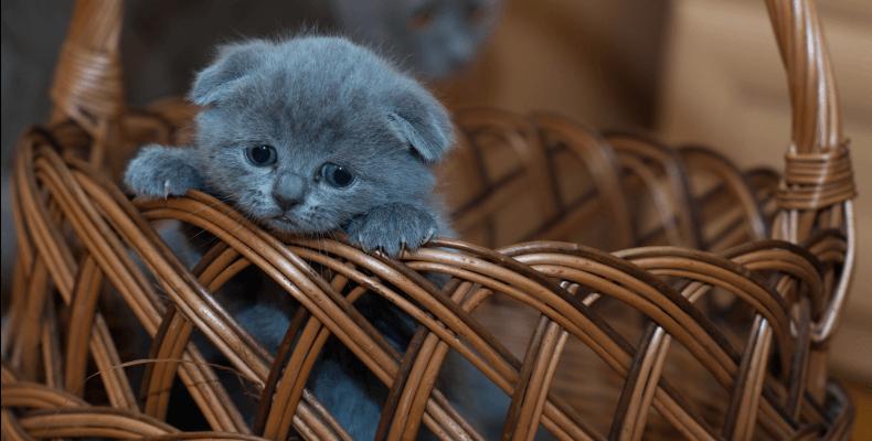 Opieka nad kotem - pierwszy kot