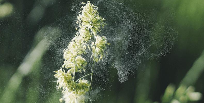 Przyczyny alergii - pyłki