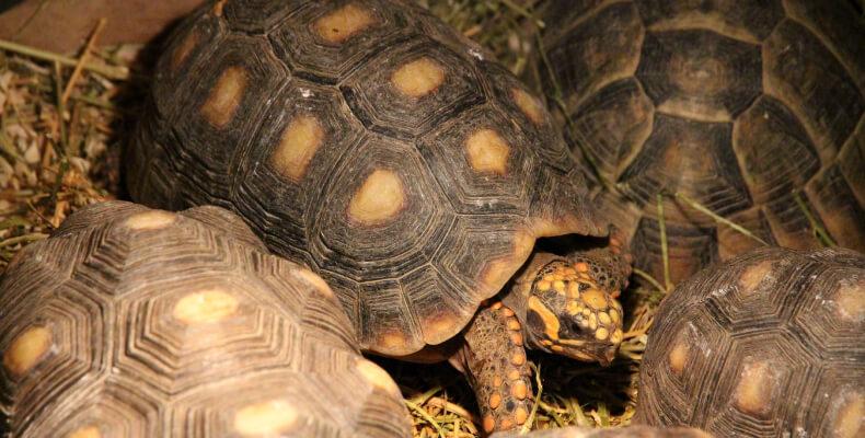 Małe zwierzęta domowe dla dzieci żółw